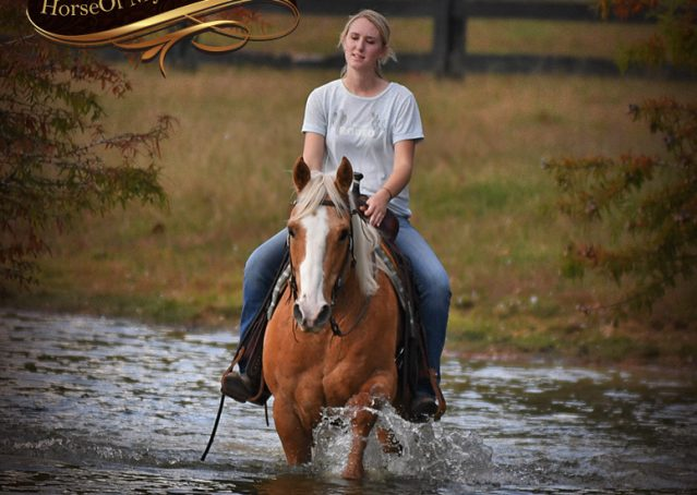 027-Indigo-AQHA-Golden-Palomino-Gelding-For-Sale