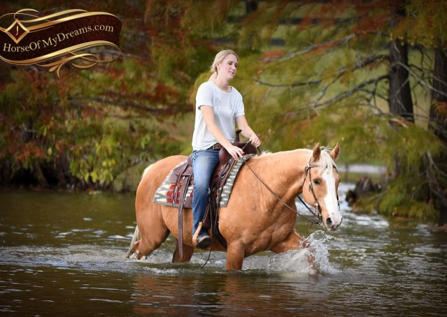 028-Indigo-AQHA-Golden-Palomino-Gelding-For-Sale