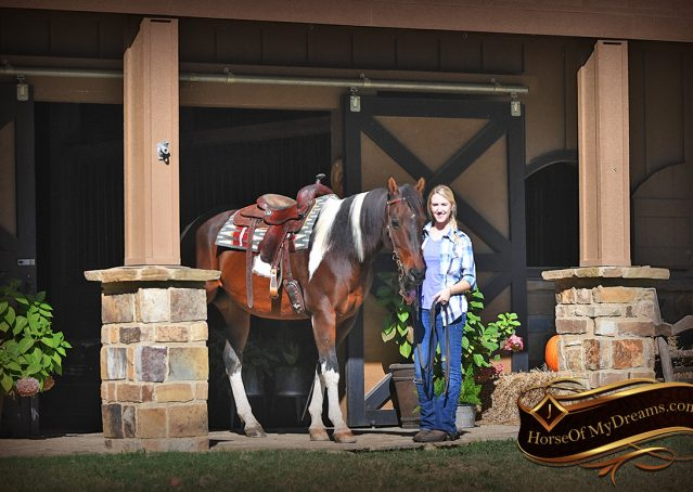 001-Nick-Bay-Tobiano-APHA-gelding-for-sale