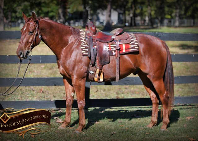 001-Phoenix-Sorrel-AQHA-gelding-for-sale
