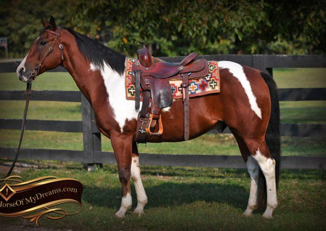 001-Rambo-Bay-Tobiano-APHA-Roping-Heeling-Gelding-Horse-For-Sale