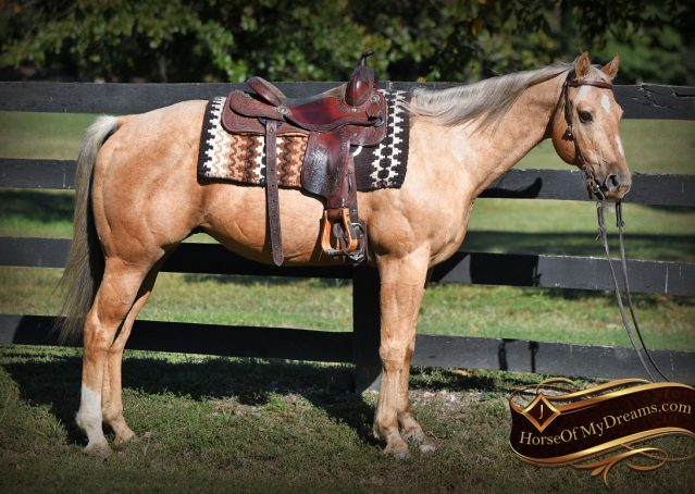 001-Trigger-AQHA-Palomino-Gelding-For-Sale