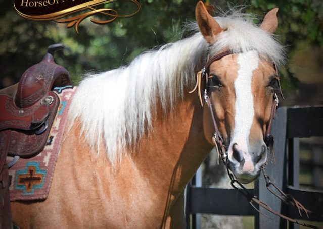 001-Val-AQHA-Golden-Palomino-For-Sale
