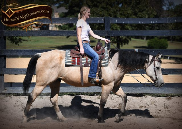 002-Buck-AQHA-Buckskin-gelding-for-sale