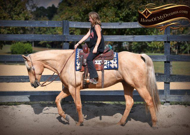 002-Frankie-AQHA=Palomino-Quarter-Horse-Western-Pleasure-for-sale