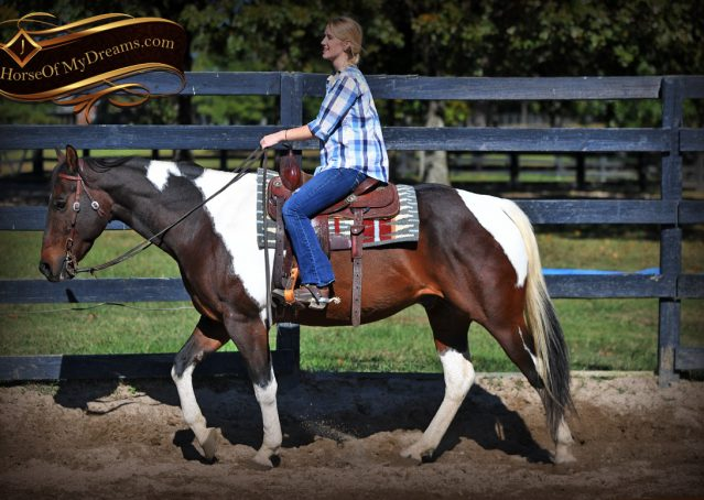 002-Nick-Bay-Tobiano-APHA-gelding-for-sale