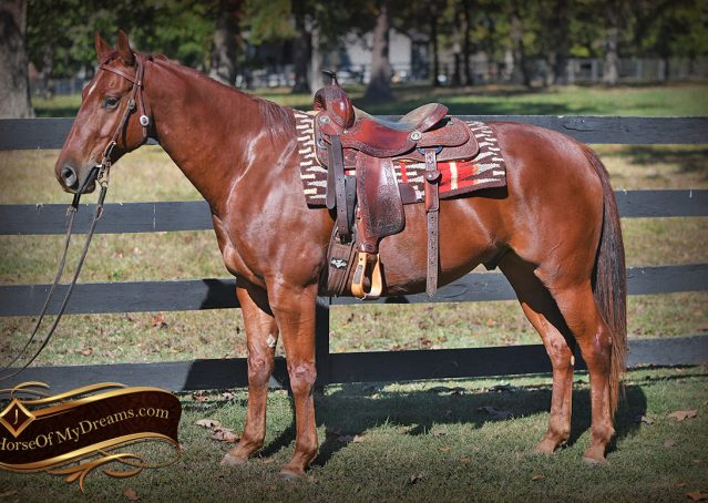 002-Phoenix-Sorrel-AQHA-gelding-for-sale