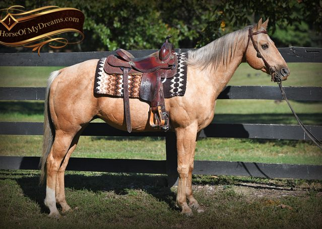 002-Trigger-AQHA-Palomino-Gelding-For-Sale