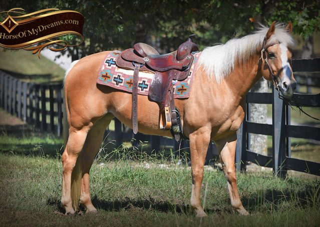 002-Val-AQHA-Golden-Palomino-For-Sale