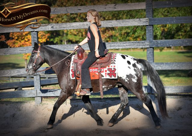003-Applejack-Flashy-POA-kids-pony-gelding-for-sale