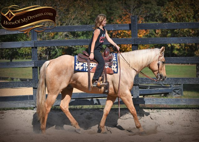 003-Frankie-AQHA=Palomino-Quarter-Horse-Western-Pleasure-for-sale