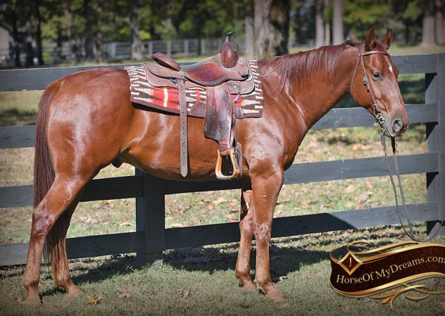 003-Phoenix-Sorrel-AQHA-gelding-for-sale