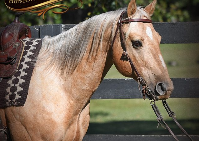 003-Trigger-AQHA-Palomino-Gelding-For-Sale