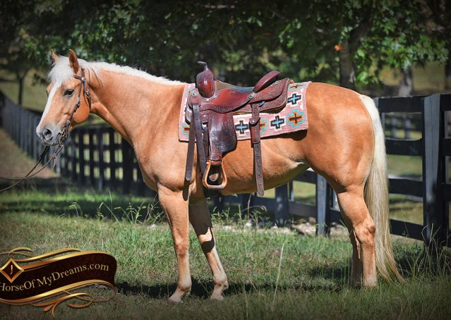 003-Val-AQHA-Golden-Palomino-For-Sale