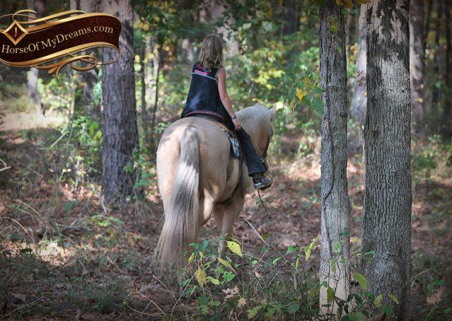 004-Frankie-AQHA=Palomino-Quarter-Horse-Western-Pleasure-for-sale