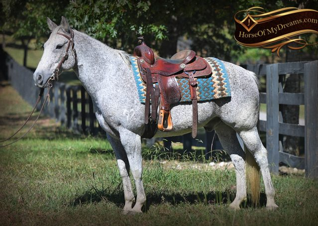 004-Ike-Grey-AQHA-gelding-for-sale