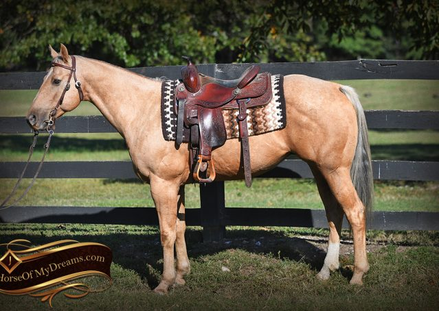 004-Trigger-AQHA-Palomino-Gelding-For-Sale