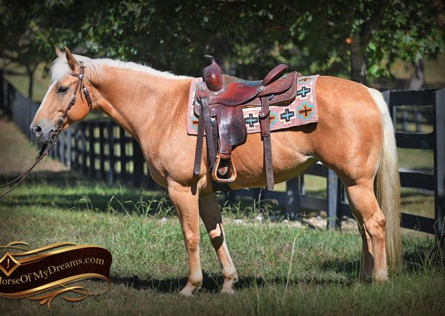 004-Val-AQHA-Golden-Palomino-For-Sale