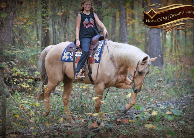 005-Frankie-AQHA=Palomino-Quarter-Horse-Western-Pleasure-for-sale