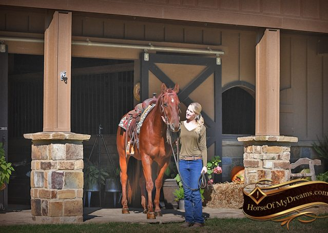 005-Phoenix-Sorrel-AQHA-gelding-for-sale