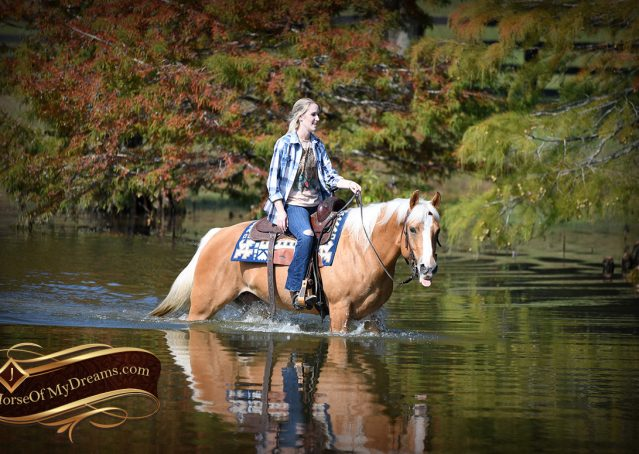 005-Val-AQHA-Golden-Palomino-For-Sale