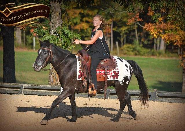 006-Applejack-Flashy-POA-kids-pony-gelding-for-sale
