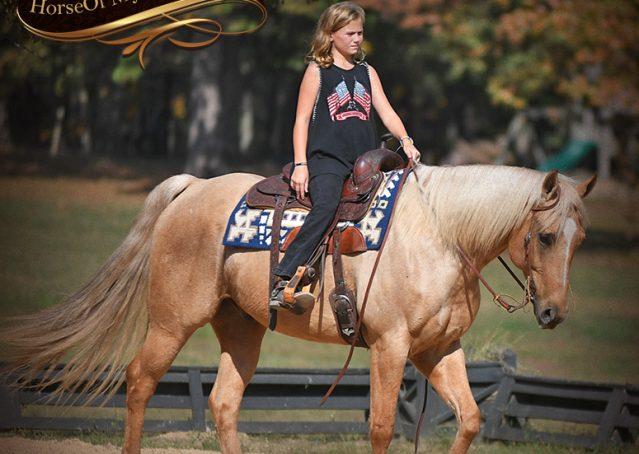 006-Frankie-AQHA=Palomino-Quarter-Horse-Western-Pleasure-for-sale