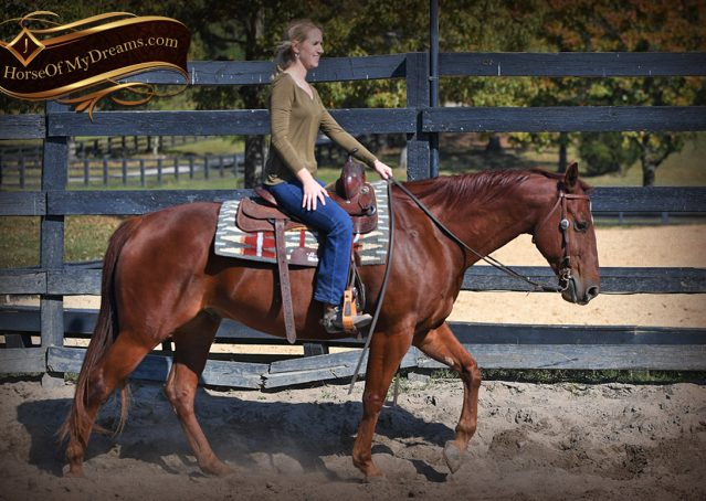 006-Phoenix-Sorrel-AQHA-gelding-for-sale