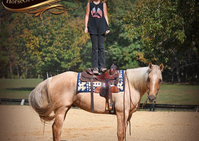 007-Frankie-AQHA=Palomino-Quarter-Horse-Western-Pleasure-for-sale