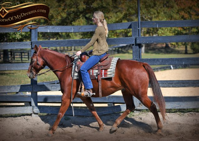 007-Phoenix-Sorrel-AQHA-gelding-for-sale