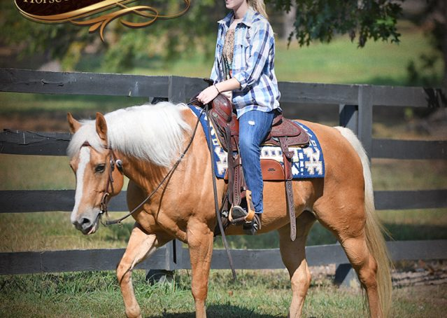 007-Val-AQHA-Golden-Palomino-For-Sale
