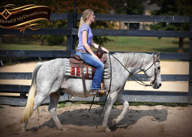 008-Ike-Grey-AQHA-gelding-for-sale