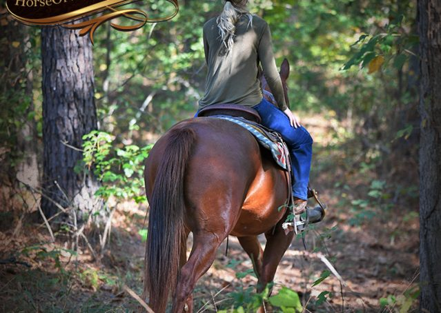 008-Phoenix-Sorrel-AQHA-gelding-for-sale