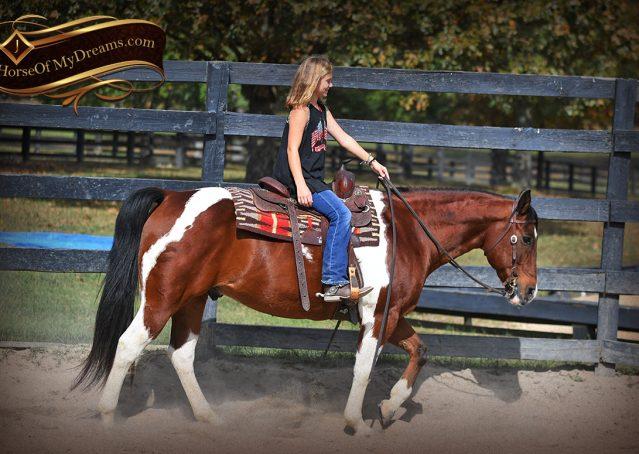 008-Rambo-Bay-Tobiano-APHA-Roping-Heeling-Gelding-Horse-For-Sale