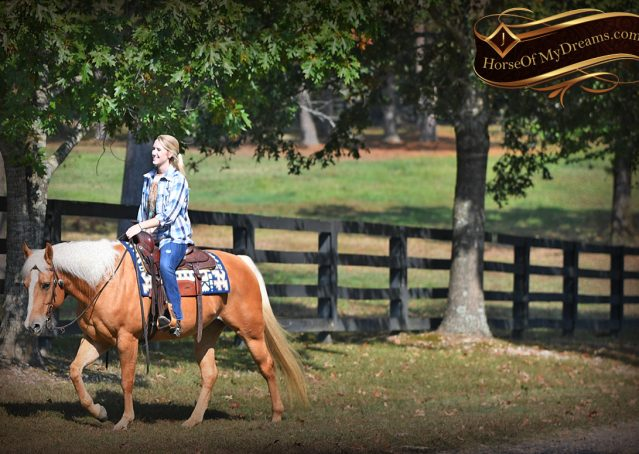 008-Val-AQHA-Golden-Palomino-For-Sale