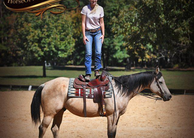 009-Buck-AQHA-Buckskin-gelding-for-sale