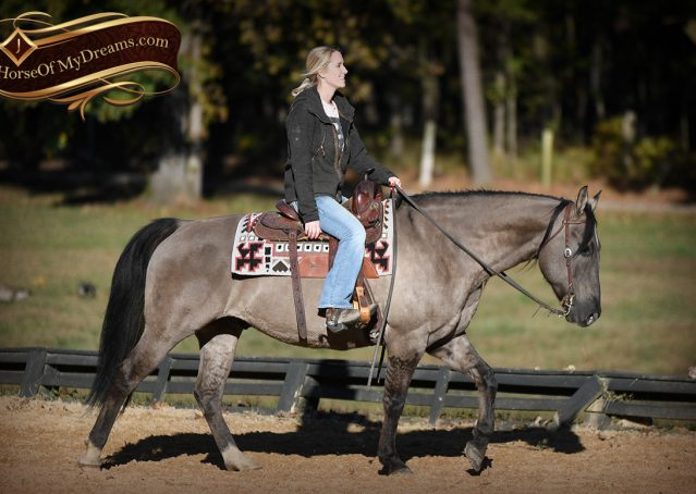009-Dakota-AQHA-Grullo-Grulla-Gelding-For-Sale