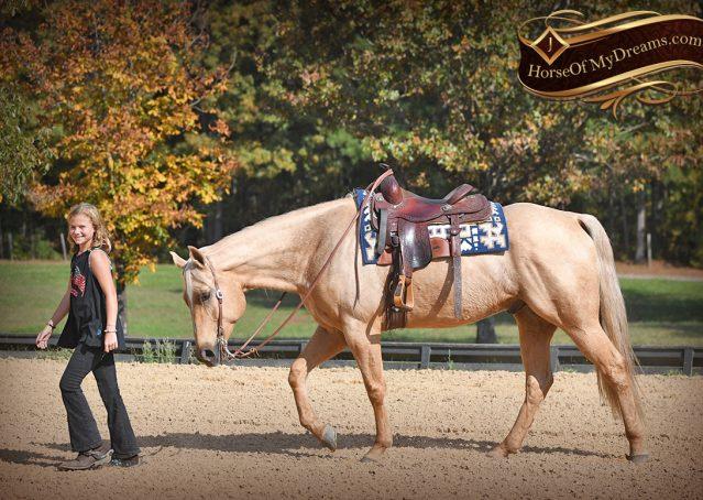 009-Frankie-AQHA=Palomino-Quarter-Horse-Western-Pleasure-for-sale