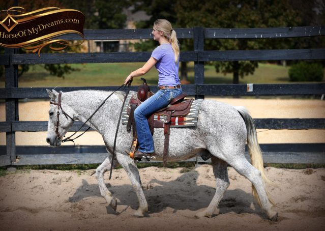 009-Ike-Grey-AQHA-gelding-for-sale