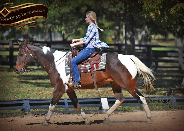 009-Nick-Bay-Tobiano-APHA-gelding-for-sale