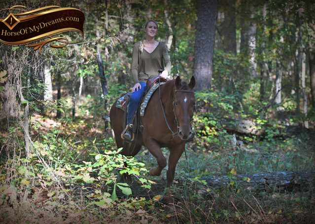 009-Phoenix-Sorrel-AQHA-gelding-for-sale