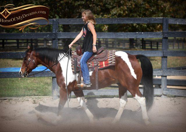 009-Rambo-Bay-Tobiano-APHA-Roping-Heeling-Gelding-Horse-For-Sale