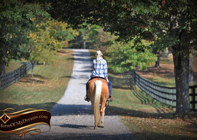 009-Val-AQHA-Golden-Palomino-For-Sale