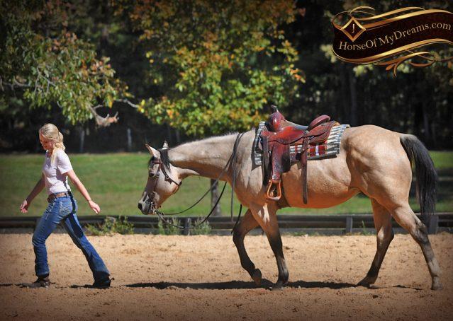 010-Buck-AQHA-Buckskin-gelding-for-sale