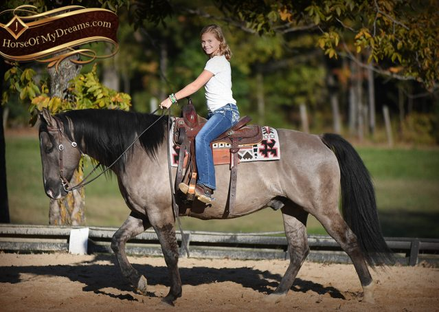 010-Dakota-AQHA-Grullo-Grulla-Gelding-For-Sale