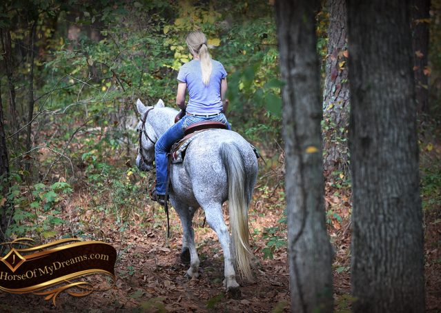 010-Ike-Grey-AQHA-gelding-for-sale