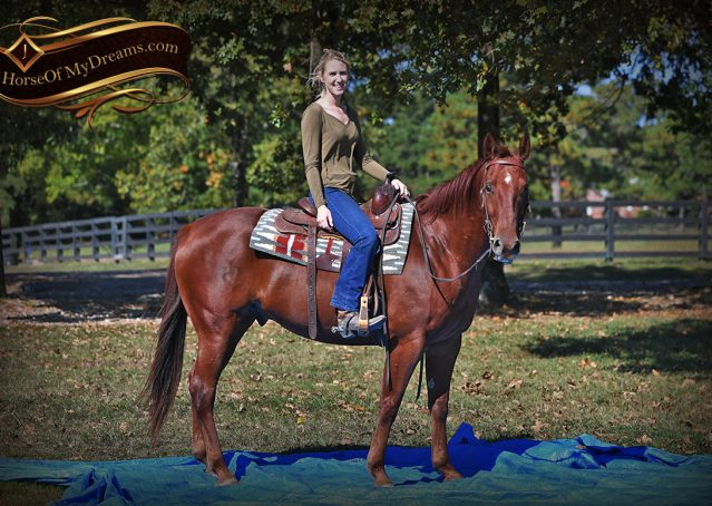010-Phoenix-Sorrel-AQHA-gelding-for-sale