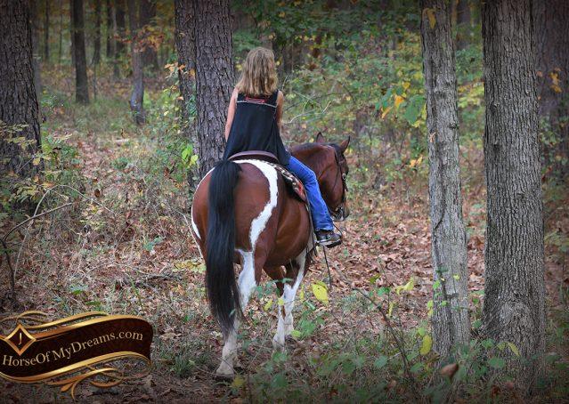 010-Rambo-Bay-Tobiano-APHA-Roping-Heeling-Gelding-Horse-For-Sale