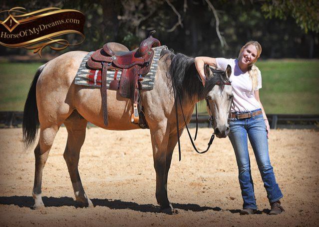 011-Buck-AQHA-Buckskin-gelding-for-sale