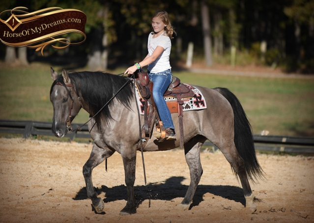 011-Dakota-AQHA-Grullo-Grulla-Gelding-For-Sale